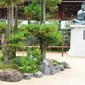 Photos: 桔梗咲く晴明神社