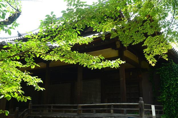 Photos: 緑の立本寺