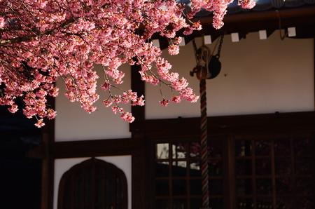 長徳寺のオカメ