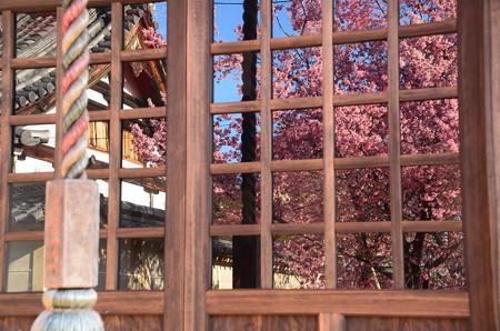 満開の桜を映して~