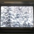 写真: 窓の向こうは童話の世界でした