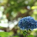 Photos: 梅雨の合間