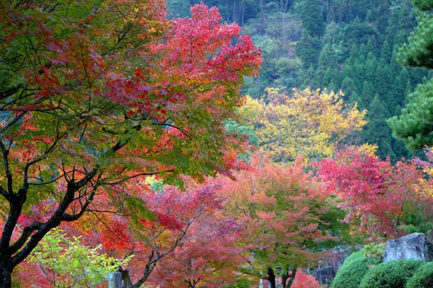 彩りの秋2013