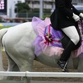 写真: 川崎競馬の誘導馬06月開催 あやめVer-120611-12-large
