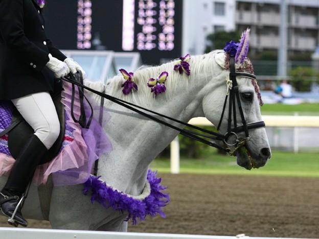 写真: 川崎競馬の誘導馬06月開催 あやめVer-120611-11-large
