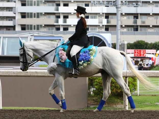 写真: 川崎競馬の誘導馬06月開催 紫陽花Ver-120613-03-large