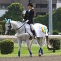 写真: 川崎競馬の誘導馬06月開催 初心者マークVer-120615-05-large