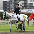 写真: 川崎競馬の誘導馬06月開催 初心者マークVer-120615-11-large