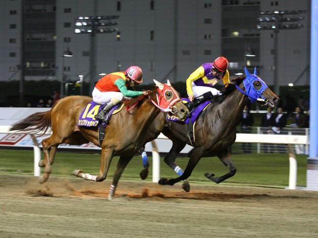 写真: 121105川崎12Rローレル賞 優勝デイジーギャル
