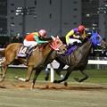 121105川崎12Rローレル賞 優勝デイジーギャル