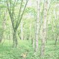 ライムグリーンの林