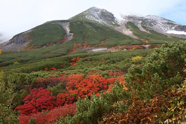 冠雪と紅葉2