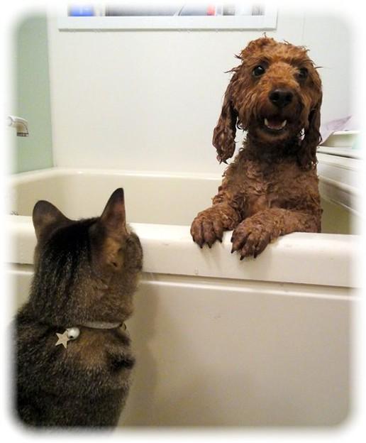 Photos: 入浴中