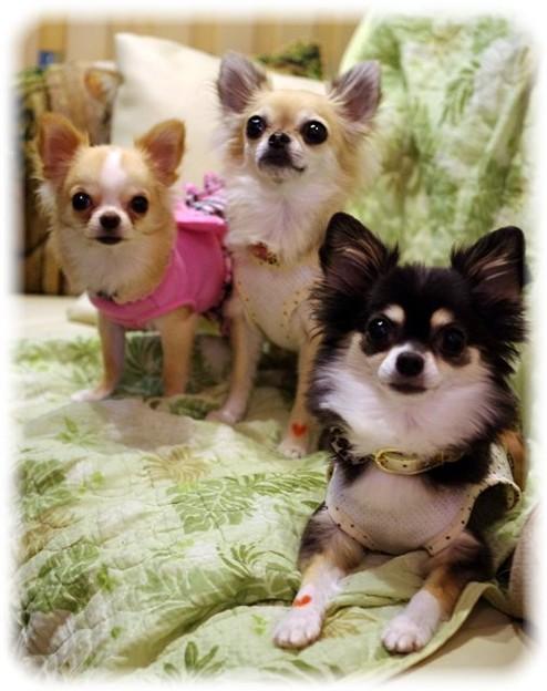 3姉妹そろって