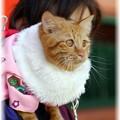 Photos: 肩乗り猫さん