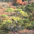 Photos: 庭園の紅葉´∀` この時期...