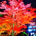 Photos: 高台寺なう!