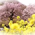 春色の風に乗って♪