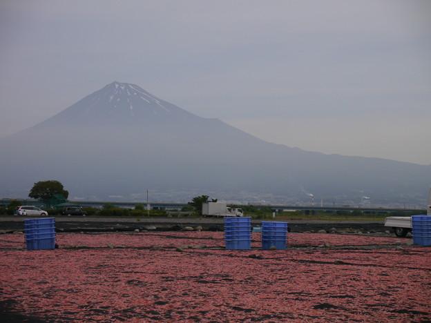 富士山とサクラエビ