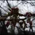 Photos: P3440360