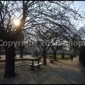 写真: P3450446