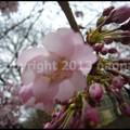 写真: P3450948