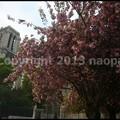 Photos: P3480784