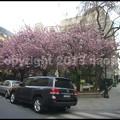 写真: P3480211