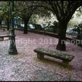 写真: P3490081