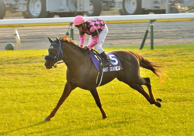 ?Smart Gear(JPN)&K.Tosaki #japancup #horseracing