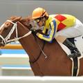 Photos: 0551_新馬戦を勝ったセレッソレアル。本命なのに3着がいない・・・【130721函館5R】