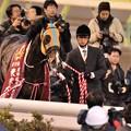 Photos: [東京大賞典2013]おとなしくなったタルマエ