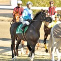 Photos: [京成杯2014]返し馬のホルボッシュ&北村宏。ちなみにこの勝負服は俺のダビスタ&ウイポの勝負服ですw