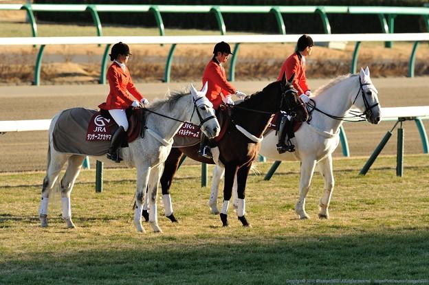 [京成杯2014]寒い中今日も頑張る誘導馬の皆さん