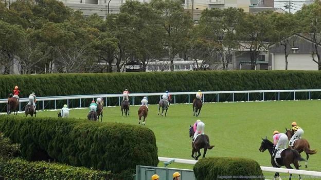 Photos: [3新芝12]新馬戦の返し馬は見てて飽きない