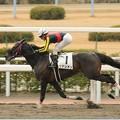 Photos: [4上5下ダ17]サナシオンが2馬身差つけて勝利