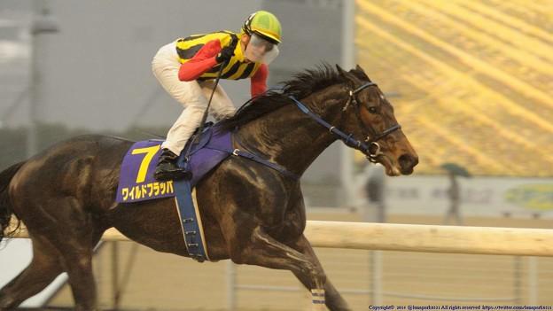 [140305川崎11Rエンプレス杯]第60回エンプレス杯優勝馬ワイルドフラッパー