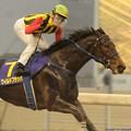 Photos: [140305川崎11Rエンプレス杯]第60回エンプレス杯優勝馬ワイルドフラッパー