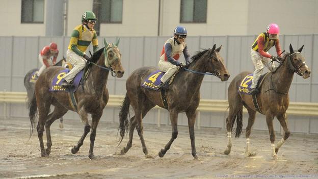 Photos: [140305川崎11Rエンプレス杯]アムールはいいところなし。トウホクビジンは泥だらけだけどよく頑張った。
