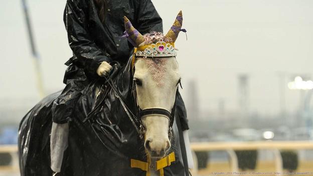 [140305川崎11Rエンプレス杯]誘導馬さん、今日はお姫様的な仕様。