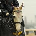 Photos: [140305川崎11Rエンプレス杯]誘導馬さん、今日はお姫様的な仕様。