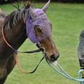 Photos: [070311中山11R中山牝馬S]8番人気で勝ったマイネサマンサ「てへぺろ」
