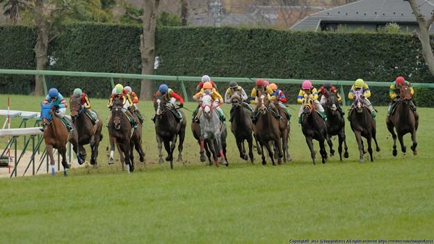 [070311中山11R中山牝馬S]ヤマニンメルベイユが引っ張ったまま直線へ。キープクワイエット、マドモアゼルドパリが粘る