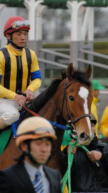 [070311中山11R中山牝馬S]ウイングレット(田中勝)、お父ちゃん(シャトル)とそっくりのパチクリ眼