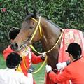 [140316中山11R中山牝馬S]レイがかかったフーラブライド。誇らしげ