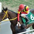 [140316中山11R中山牝馬S]フーラブライド「先生、吉田さん、こっちもペタペタ!」