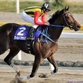 Photos: [140409船橋10RマリーンC]第18回マリーンC優勝馬ワイルドフラッパー