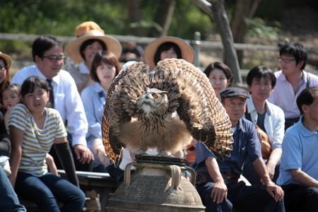 H25.9 掛川花鳥園 11