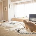 Photos: 寝室