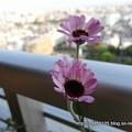Photos: DSC09784